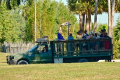 Funny person giving food to a giraffe, during safari tour at Bush Gardens Tampa Bay Theme Park. Tampa, Florida. October 25, 2018 Funny person giving food to a stock images