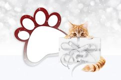 Funny pet cat showing a gift box with silver ribbon bow and paw. Imprint shape  on blurred lights background blank template and copy space Royalty Free Stock Photo