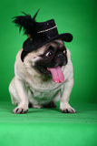 Funny pet dog Royalty Free Stock Image