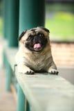 Funny pet dog stock image