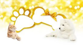 Funny pets cat and dog  together with bone and paw imprint shape. Gift card golden ribbon bow on blurred christmas lights background blank template and copy Royalty Free Stock Images