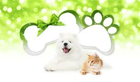 Funny pets cat and dog  together with bone and paw imprint shape. Gift card green ribbon bow on blurred christmas lights background blank template and copy Stock Photos
