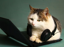 Funny picture of cat lay on copmuter laptop Royalty Free Stock Photography
