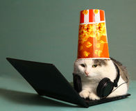 Funny  picture of cat with notebook and headphones Royalty Free Stock Photos
