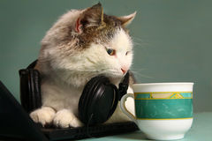 Funny  picture of cat with notebook and headphones Stock Photo