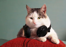 Funny  picture of cat with notebook and headphones Stock Photography