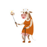 Funny picture cow photographer mamal person take selfie stick in his hand and cute animal taking a selfie together with Stock Photos