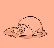 Funny pig puddle cartoon. Illustration Stock Photos