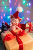 Funny pig in a red bag with big gift on background with illumination royalty free stock photo