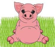 Funny pig walk Royalty Free Stock Image