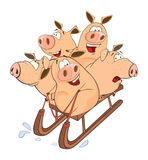 Funny piglets on sled. Cheerful pigs go for a drive on sled Royalty Free Stock Photography