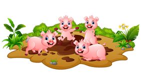 Funny Pigs Playing In The Mud Stock Image
