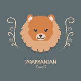 Funny  pomeranian vector illustration. Cute cartoon  portrait of a dog. Royalty Free Stock Photo