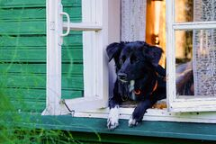 Funny black and white dog at window somewhere in countryside