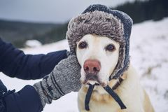 Funny portrait of dog with cap stock photography
