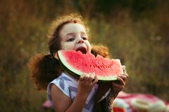Funny portrait of an incredibly beautiful curly-haired little girl eating watermelon, healthy fruit snack, adorable toddler child. With curly hair playing in a Stock Image