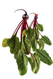 Funny portrait made of zucchini,  beet  and fruits Royalty Free Stock Photo