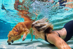 Funny portrait of smiley woman with dog in swimming pool. Underwater action. Smiley woman play with fun, training golden retriever puppy in swimming pool - jump stock photo