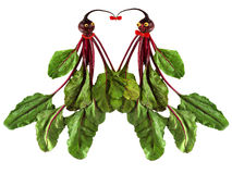 Funny portraits of men and women, made from beets. Illustration of love.  stock illustration