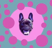 Funny poster.  French bulldog in the sphere. Dog is  symbol of Chinese New Year. Funny poster.  French bulldog in the sphere. Dog is symbol of Chinese New Year Stock Photography