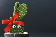 Funny potted Opuntia microdasys bunny ears cactus with googly eyes in front of dark background royalty free stock image