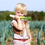 Funny preschooler girl picking leek in the field Stock Images