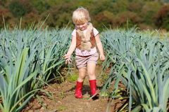 Funny preschooler girl picking leek in the field Royalty Free Stock Images
