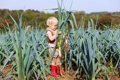 Funny preschooler girl picking leek in the field Royalty Free Stock Image