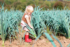 Funny preschooler girl picking leek in the field. Happy little child, cute blonde toddler girl in casual outfit enjoying nature playing outdoors helping to Stock Photo