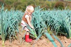 Funny preschooler girl picking leek in the field Stock Photo