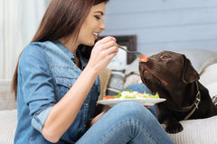 Funny pretty girl teasing her dog Stock Photos