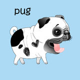 Funny pug Stock Photography