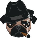 Funny pug with cigar. Portrait of Pug-dog with Cigar, Cool Guy, Gangster Look, Vector Illustration Stock Photos
