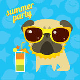 Funny pug dog on the summer party with cocktail and sunglsses Stock Photos