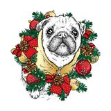 Funny pug in the New Year`s wreath made of fir branches decorated with balls and bows. New Year`s and Christmas. stock illustration