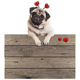 Funny pug puppy dog hanging with paws on blank wooden vintage promotional sign with red hearts, isolated on white background Royalty Free Stock Image