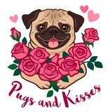Funny pug puppy dog holding a bunch of pink roses, with hearts and text. `Pugs and Kisses`, isolated on white. Valentine`s day, love, friends, kids, pet lovers stock illustration