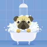 Funny pugs in different situations Royalty Free Stock Photo