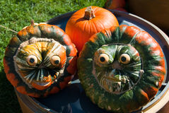 Funny pumpkin faces. Close up royalty free stock images