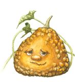 Funny pumpkin. Watercolor funny pumpkin with face Stock Photography