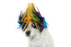 FUNNY PUNK ROCK DOG WEARING A COLORED WIG, LOOKING AT CAMERA WITH ONE EYE. ISOLATED AGAINST WHITE BACKGROUND. FUNNY PUNK ROCK DOG WEARING A MULTI COLORED WIG royalty free stock photos