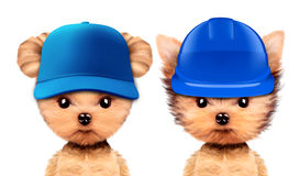 Funny puppies in hard hat and baseball hat Royalty Free Stock Photos