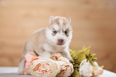 Funny puppy with a bouquet of flowers Stock Images
