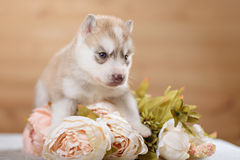 Funny puppy with a bouquet of flowers Stock Photo