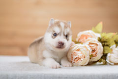 Funny puppy with a bouquet of flowers Stock Photos