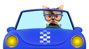 Funny puppy in the cabriolet with sunglasses royalty free illustration