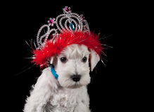 Funny puppy Royalty Free Stock Photos