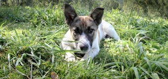 Funny puppy in green. Funny puppy in the grass Stock Photo