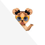 Funny puppy holding empty banner. Funny puppy with sunglasses holding empty banner, isolated on white. Connection and advertising concept. Realistic 3D Stock Images