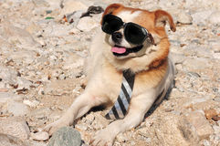 Funny Puppy In Sunglasses Stock Photography